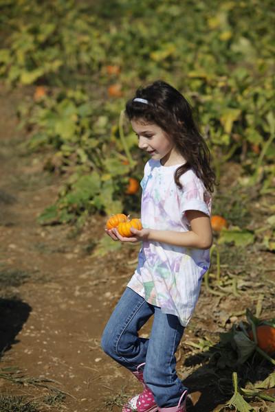 Pumpkin Picking 2009