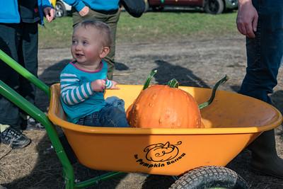 Pumpkin Picking at Bob's Corn & Pumpkin Farm