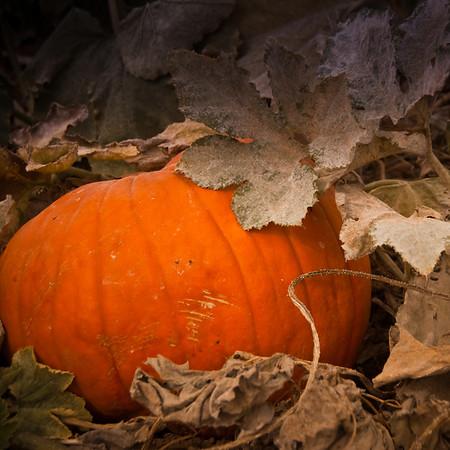 Pumpkins and Football