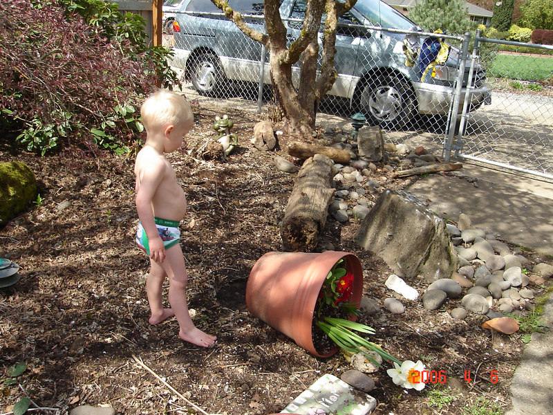 Searching for worms and bugs.  My backyard has over turned pots, over turned lawn ornaments and ripped up black plastic from the boys digging for creatures.