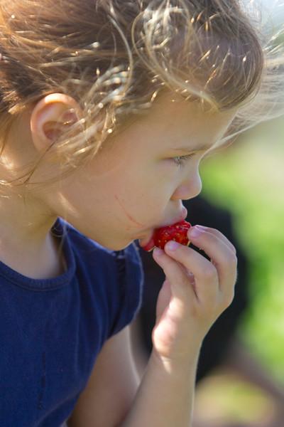 Strawberries 051_1