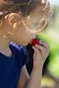 Strawberries 052_1