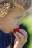 Strawberries 051_2