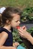 Strawberries 028