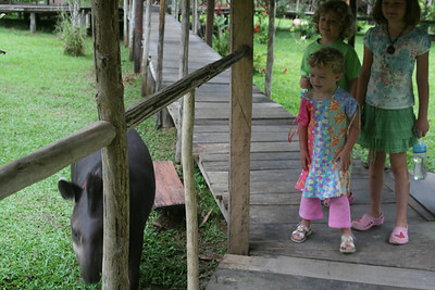 meeting the tame tapir at ARL