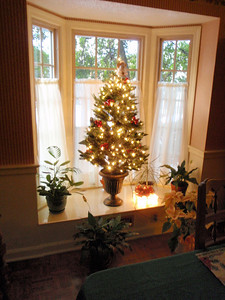 Bay window tree aglow!