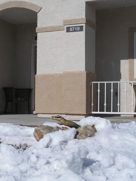 Snow in Albuquerque - January 2007
