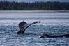 Juneau Whale Cruise