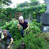 Weeds/Umkraut @ Oma's Grab