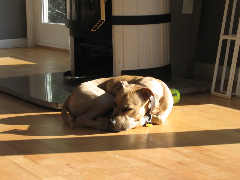 Moving Day - December 20, 2006.  An empty house, Odie takes one last nap in the sun before we leave it for good.