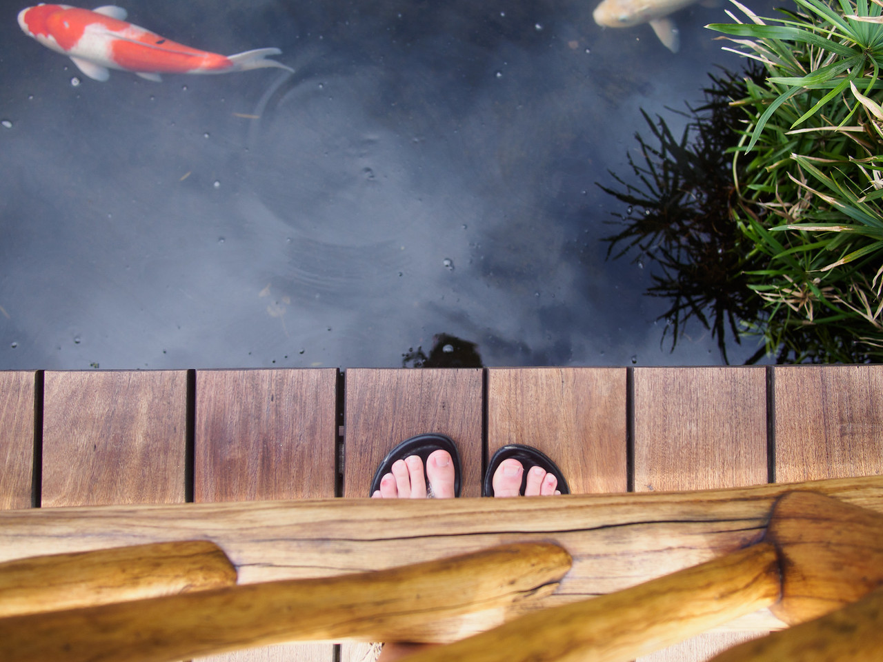 Feet and Fish, Hawaii