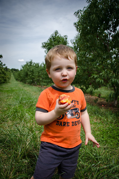 Peach picking at Lyman Orchards