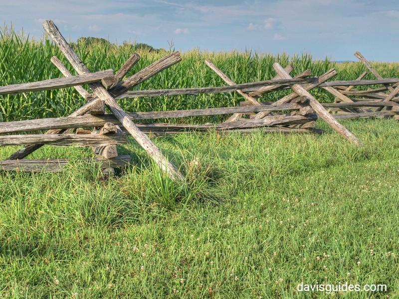 Cornfield at Antietam