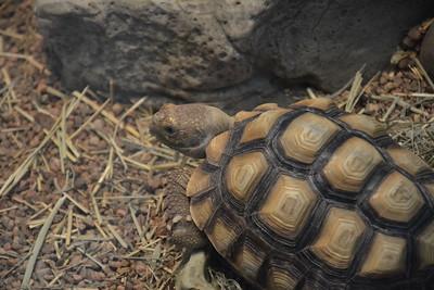 Reptile Rendezvous at RBG