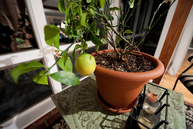 A little potted orange tree with a surprise on it. My mom's had an orange tree for as long as I can remember, and it's bigger than this, but it's never produced fruit, let alone this full-size beauty. It won't be ripe by the end of the trip so we leave it alone.
