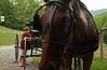 Iliana & the horse