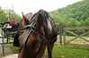 Iliana, Sydney & the horse