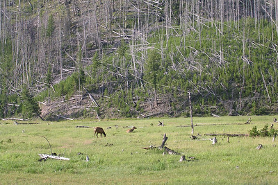 On our way into Yellowstone National Park, we stopped alongside the road to see a few elk.