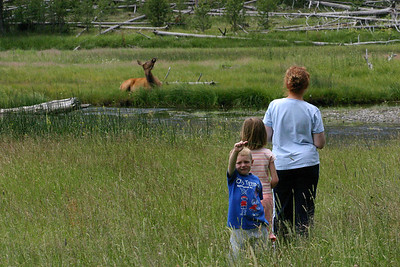 Kathy and the kids getting a closer look at an elk. We ended up seeing a LOT of elk during our trips through Yellowstone National Park.