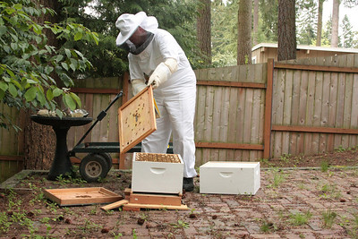 Preparing to add the second box to the hive to give the girls more space to work.