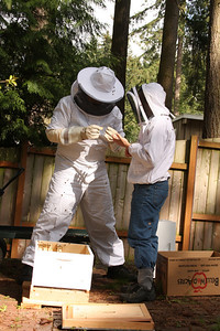 Preparing to put the queen in hive.  She will stay in a small box until all the workers eat the marshmallow that is keeping her in.