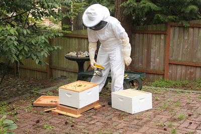 Preparing to add the second box, called a Super, to the hive to give the girls more space to work.