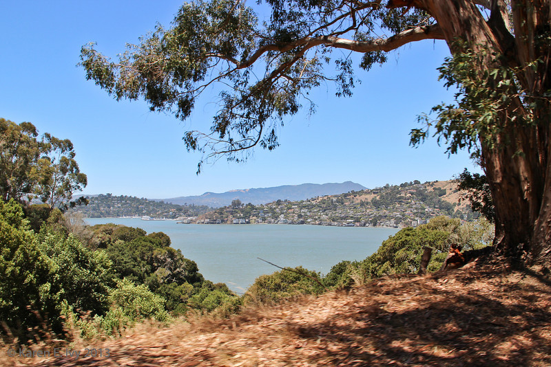 Marin from the Angel Island road