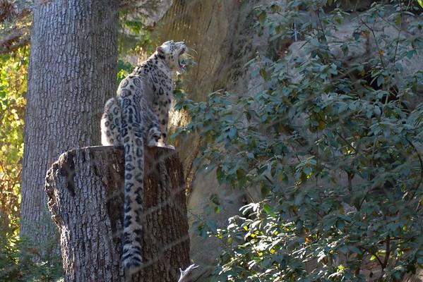 Roger Williams Zoo 11/8/2014