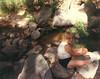 Rosie resting by a creek - 1986