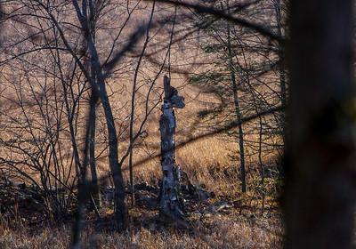Bill's-woods