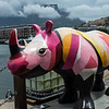 Rhinoceros on the waterfront