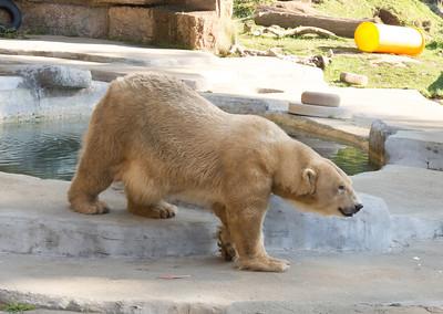SF Zoo Christmas 2013