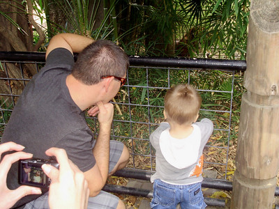 Mark & Joey looking at the tiger