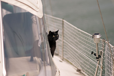 While Figs sniffs the unfamiliar air on the port side.