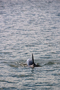 We encountered many dolphins, however none of them would cooperate for a proper picture.