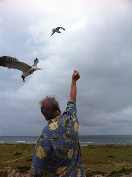 Yup, the seagull took it right from Wayne's outstretched hand!