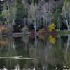 Vason Lake, Los Gatos