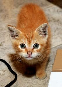 Rescue Kitten:  Josh Mutz