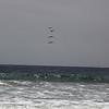 Birds over the beach.