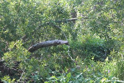 snake tree?