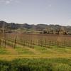 Passing through various vineyards