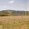 Passing through various vineyards