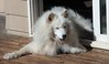 """Sasha """"explodes"""" out the door, with her front feet out and back feet inside."""