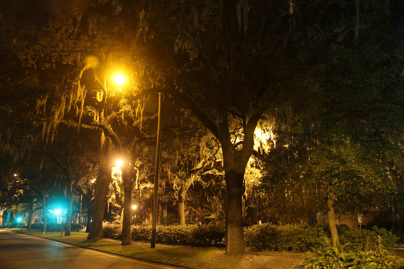 Savannah parks at night