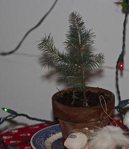 Grand Christmas Tree.