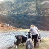 Bonnie petting goats near Portpatrick, Wigtownshire<br /> November 1969