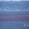 and MORE red tide............