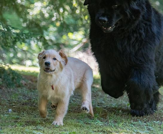 Bella and Regan