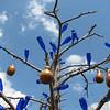 Bottle tree in the garde