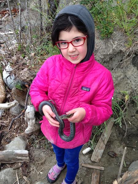 """now that's a snake! Northwestern Garter Snake. Named """"Sam"""""""